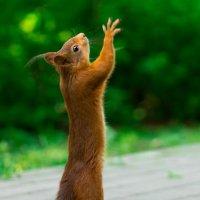 Кинь орехов боже! :: Alex Bush