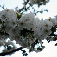 Весна :: Наталья Пономаренко