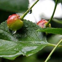 А просто летний дождь прошел... :: Маргарита ( Марта ) Дрожжина