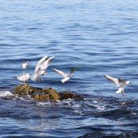 Чайки :: Nyusha