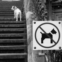 Собака :: Сергей Ляпин
