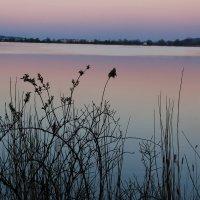 Вечер на озере :: Tanika Неделенко