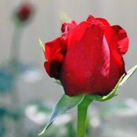 И пурпур вянет с нею рядом, иль грубым делается он. :: Валентина ツ ღ✿ღ
