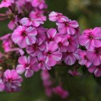 Цветочный хоровод-208. :: Руслан Грицунь
