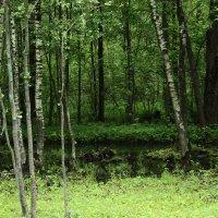 В лесу. :: Юлия Ваганова