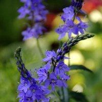 цветы :: Анастасия Степанова