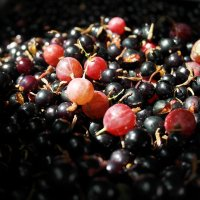 Летние ягоды :: татьяна Токмачева