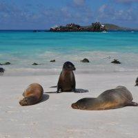 На диком пляже Галапагоса. :: Одиноков Юрий