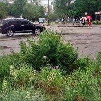 Летний дождик не помеха :: Нина Корешкова
