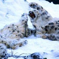 Радость зиме :: Alexander Andronik