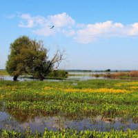 Журавлей болотные просторы... :: Лесо-Вед (Баранов)