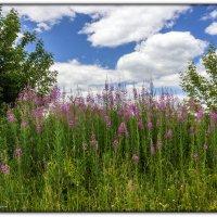 полевые цветы :: Sergey Bagach