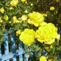 Время цветения роз :: Елена Елена