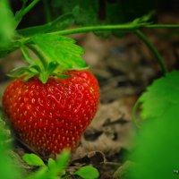 Цветочно-ягодная серия :: Андрей Мохов