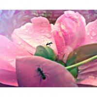 мир муравьев :: Yulia Vi