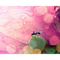 муравей :: Yulia Vi