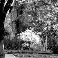 Белый цвет :: Николай Филоненко