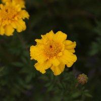 Цветочный хоровод-218. :: Руслан Грицунь