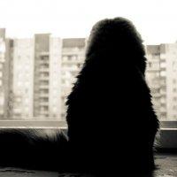 Кот у окна :: Станислав Гераськин
