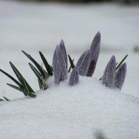 Назло зиме :: Виталий