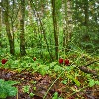 В лесу. :: Алексей Caveman