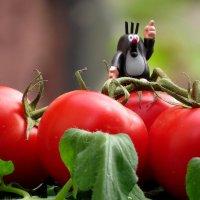 А ТЫ посадил огород? :: Маргарита