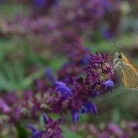 Бабочка :: Cvetok Lotosa {Елена}