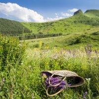 Лето цветет ... :: Евгений Khripp