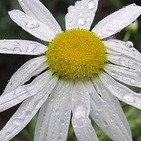 никого не пощадил этот дождь :: валя