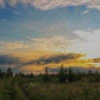 На лесной опушке :: Иван Анисимов