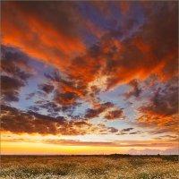 Про небо, вечер и ромашки... :: Александр Никитинский