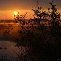 Утро в Пушкинских горах :: Наталья Левина