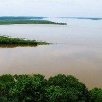 Река Амур. Сарапульское. :: Лариса Мироненко