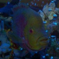 В аквариуме :: Shmual Hava Retro