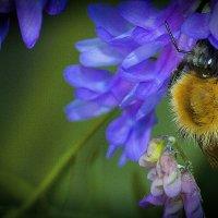 пчелка :: Андрей Выровой