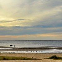 Всадник и конь, идущие берегом моря :: Николай Танаев