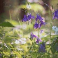 Чудеса в лесу :: Евгения Вишнякова
