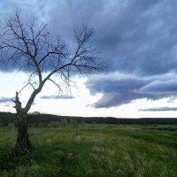 Дерево :: Степан