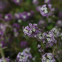 Цветочный хоровод-226. :: Руслан Грицунь