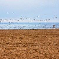 Птицы и море :: Николай Танаев