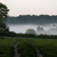 В туман :: Александр