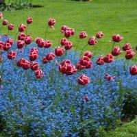 Цветы :: Vadim Odintsov