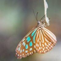 На ферме бабочек :: Андрей Кулаков