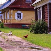 Июньским днем в деревне :: Татьяна Ломтева
