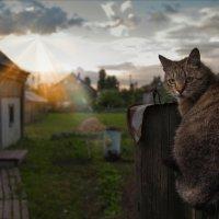 хорошо в деревне летом... :: Александр Фёдоров