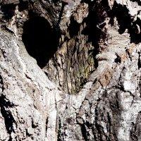 кора дерева <3 :: Ирина Кочкарева