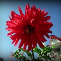 Летние цветы :: Андрей Заломленков