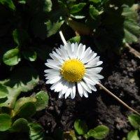 Цветочный хоровод-236. :: Руслан Грицунь