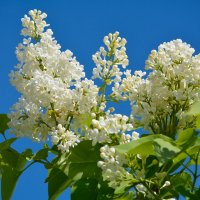Весны цветенье... (этюд 4) :: Константин Жирнов
