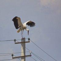 Я есть местный орель!!! :: M Marikfoto